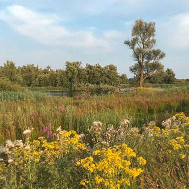 Biesboschaktief-omgeving-Jantjeskeet